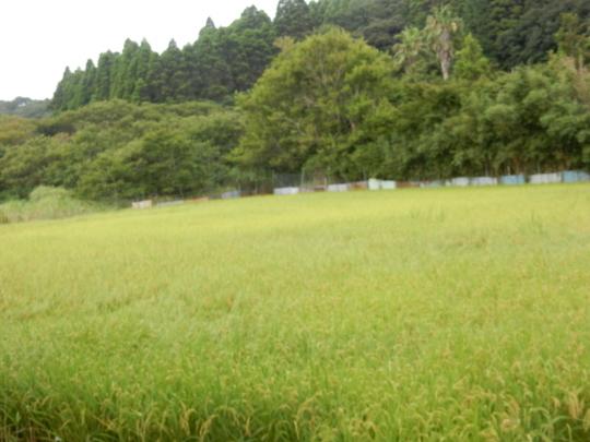 '19,8,15(木)田舎道には蝉も秋の虫も~!_f0060461_07261634.jpg