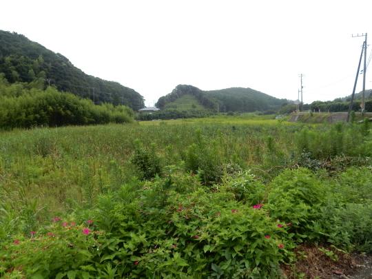'19,8,15(木)田舎道には蝉も秋の虫も~!_f0060461_07295071.jpg