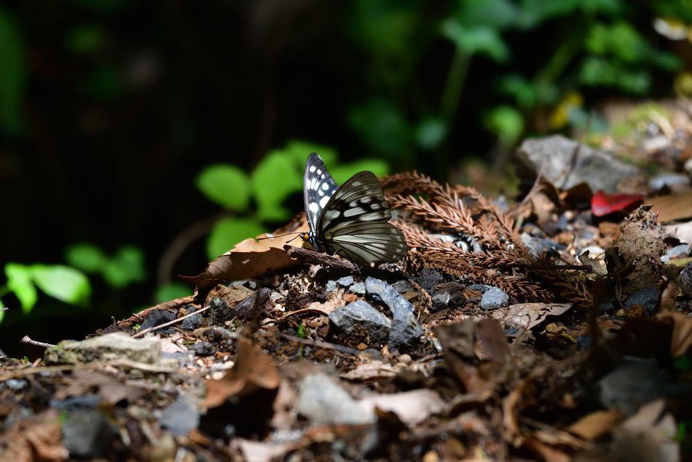 蝶も難しい_f0202686_17572903.jpg