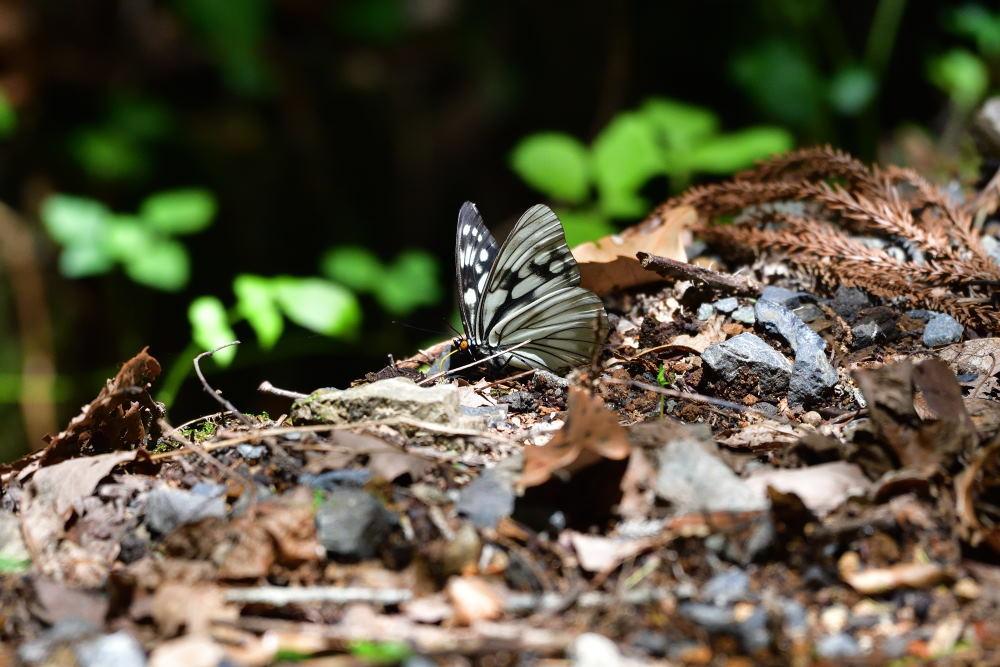蝶も難しい_f0202686_17573846.jpg