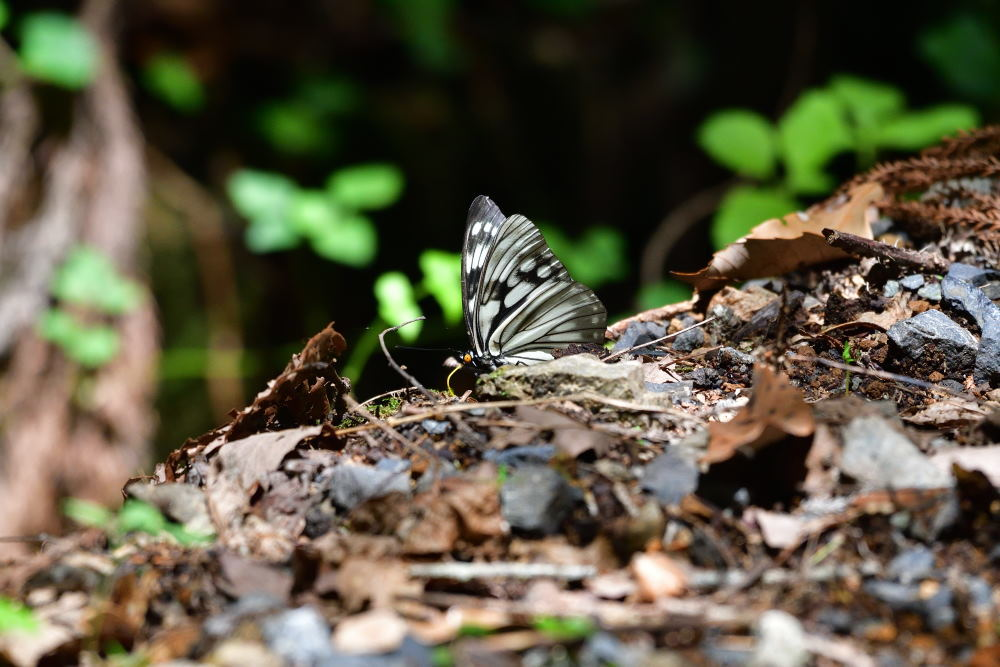 蝶も難しい_f0202686_17574591.jpg