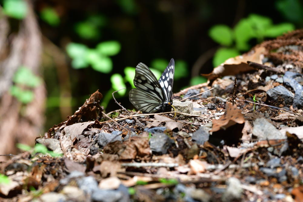 蝶も難しい_f0202686_17575238.jpg