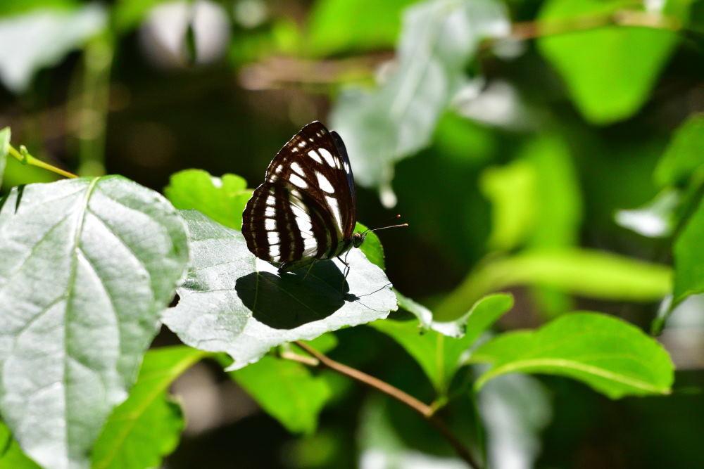 蝶も難しい_f0202686_17575916.jpg