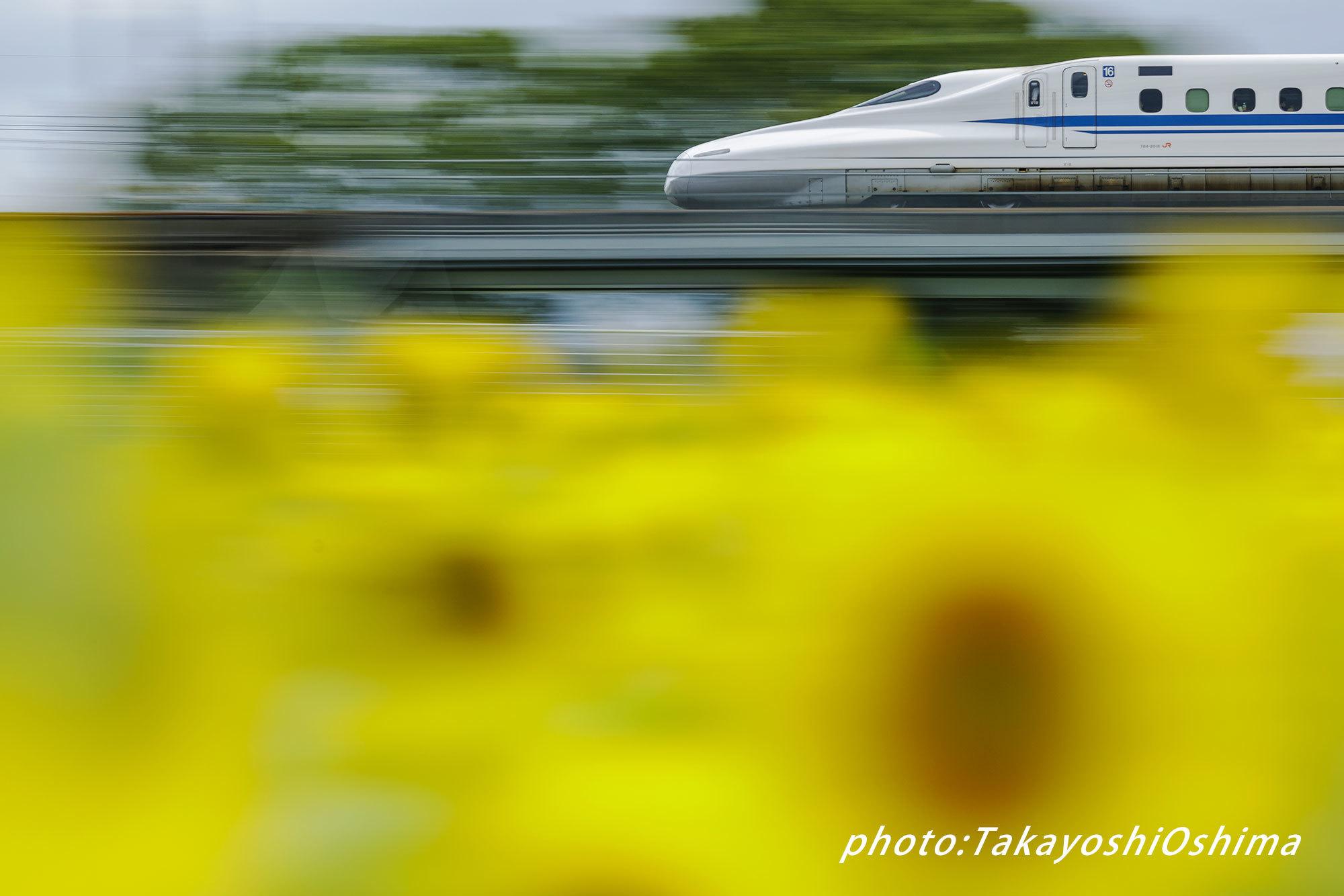 ヒマワリと新幹線_f0361287_11002497.jpg