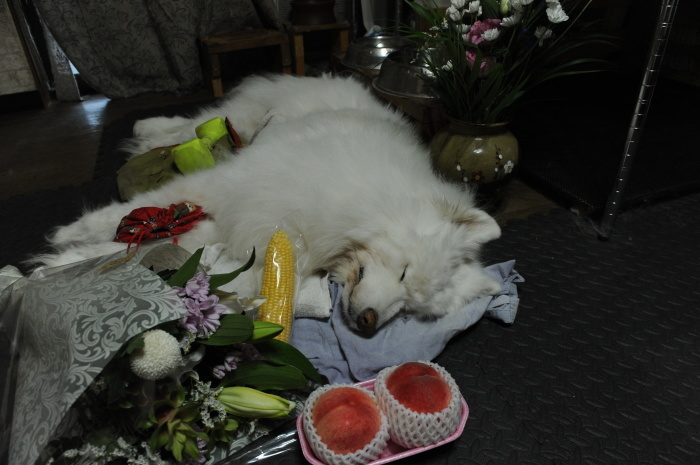 ネージュのお葬式。_a0049296_09105393.jpg