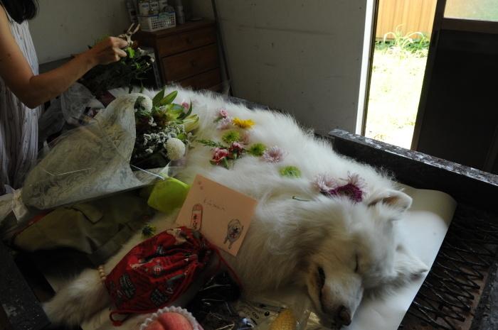 ネージュのお葬式。_a0049296_09374412.jpg