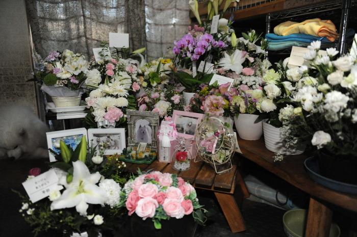 ネージュのお葬式。_a0049296_09430897.jpg