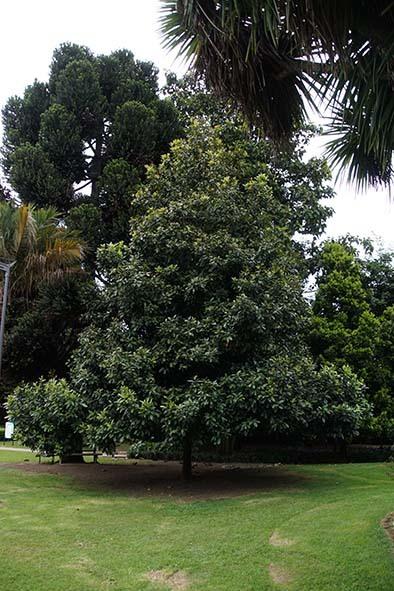 再び植物園_c0177135_20344053.jpg