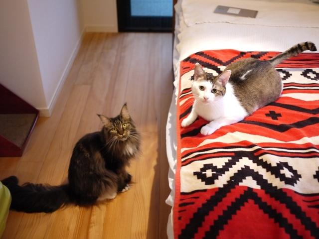猫のお留守番 ちーちゃん紙音ちゃん編。_a0143140_22575344.jpg