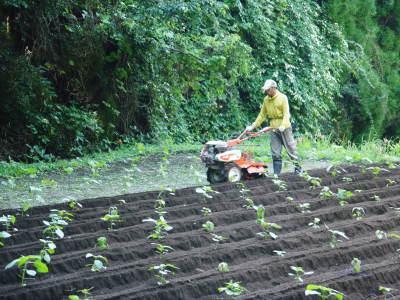 無農薬・無化学肥料栽培の『菊池水源産エゴマ』の台風一過の様子!今年もしっかり手をかけ育てます!_a0254656_17433093.jpg