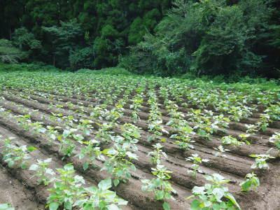 無農薬・無化学肥料栽培の『菊池水源産エゴマ』の台風一過の様子!今年もしっかり手をかけ育てます!_a0254656_17580999.jpg