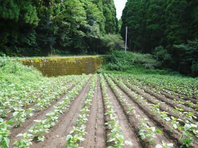 無農薬・無化学肥料栽培の『菊池水源産エゴマ』の台風一過の様子!今年もしっかり手をかけ育てます!_a0254656_18014017.jpg
