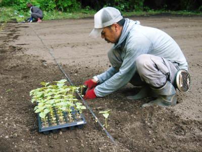 無農薬・無化学肥料栽培の『菊池水源産エゴマ』の台風一過の様子!今年もしっかり手をかけ育てます!_a0254656_18050600.jpg