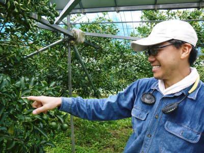 究極の柑橘「せとか」 匠の摘果作業で今年も元気な夏芽が芽吹いています!_a0254656_18474844.jpg