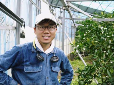 究極の柑橘「せとか」 匠の摘果作業で今年も元気な夏芽が芽吹いています!_a0254656_18534794.jpg