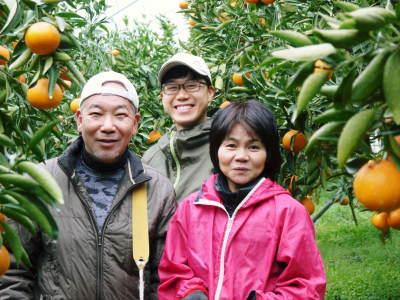 究極の柑橘「せとか」 匠の摘果作業で今年も元気な夏芽が芽吹いています!_a0254656_19093452.jpg