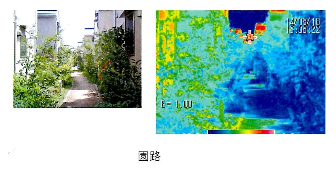微気候の効果_b0015157_11510280.jpg