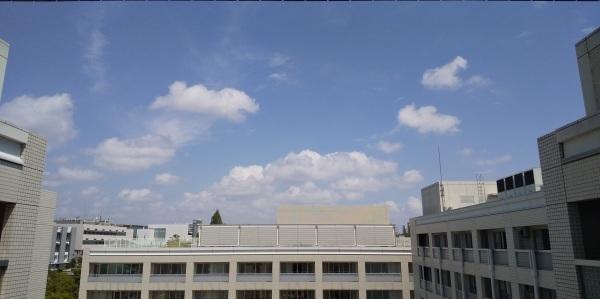 夏空がもどってきました❗️「まな板の鯉」情報😁シャワーもオッケー👌復活間近かな⁉️_f0061067_16434154.jpg