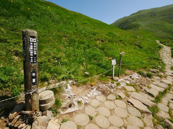 夏の月山 花の山_a0351368_15270981.jpg