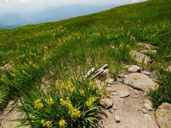 夏の月山 姥ヶ岳_a0351368_15320486.jpg