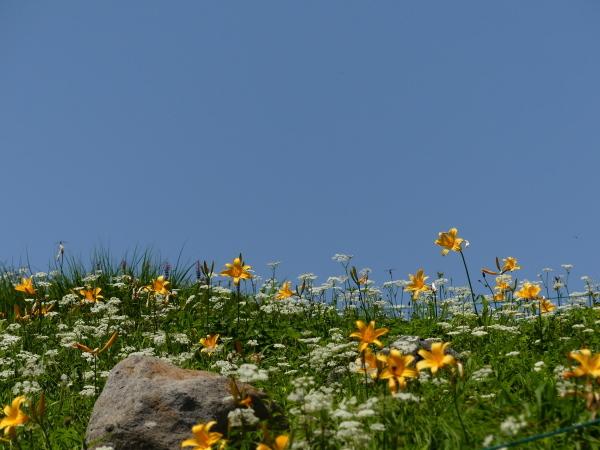 夏の月山 姥ヶ岳_a0351368_15523438.jpg