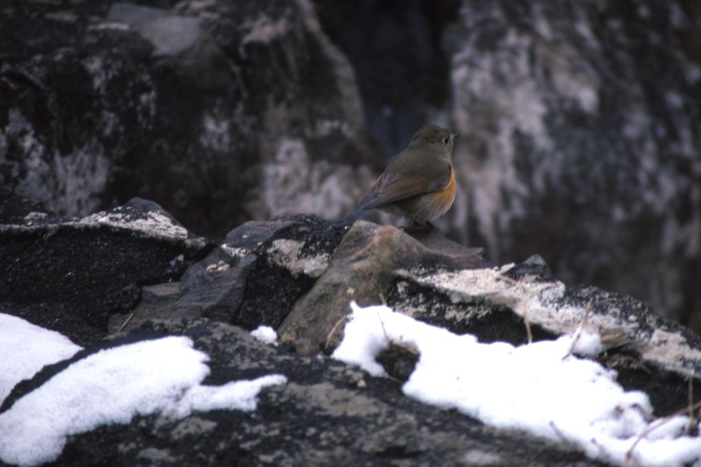 4月の雪の日 - 1988年早春・秩父鉄道 -_b0190710_17290593.jpg