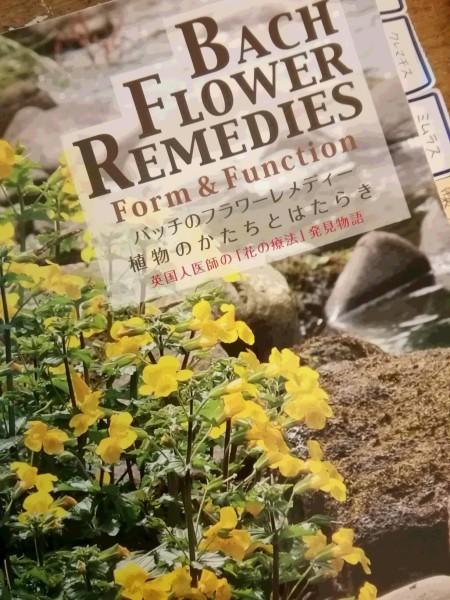 バッチのフラワーレメディ 植物のかたちとはたらき_e0257524_17215504.jpg