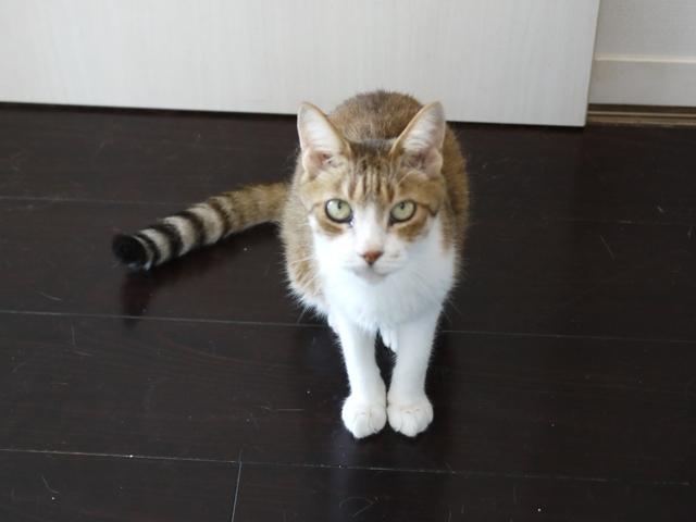 猫のお留守番 ウィンクくん編。_a0143140_17454512.jpg