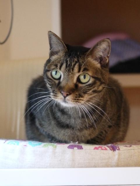 猫のお留守番 ララちゃん編。_a0143140_17474345.jpg