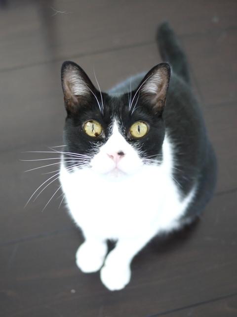 猫のお留守番 ピケちゃん編。_a0143140_17491645.jpg
