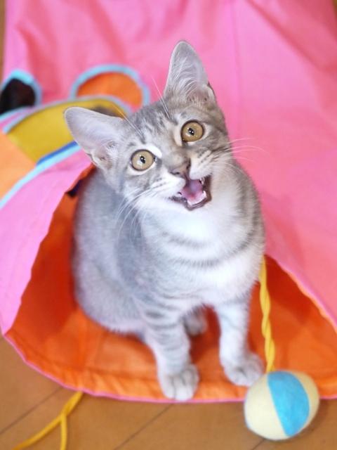 猫のお留守番 るうくん編。_a0143140_17541798.jpg