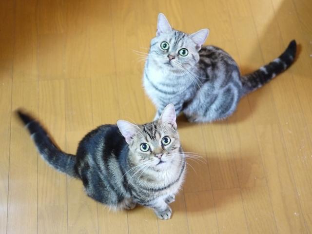猫のお留守番 つむぎくんけむりくん編。_a0143140_17561234.jpg