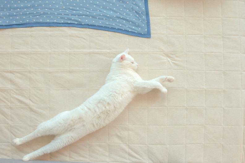 姪っ子が子猫を保護したお話_f0189086_21060653.jpg