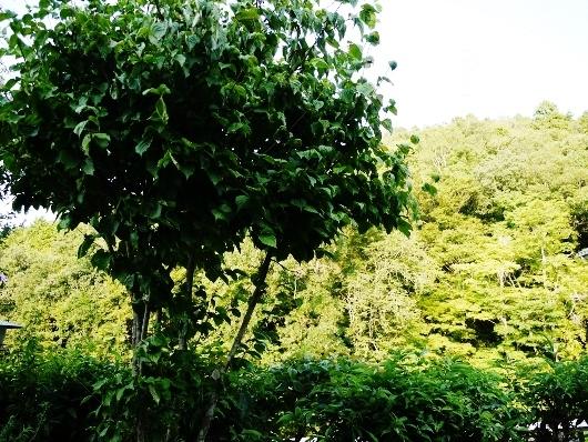 山からの風&ミロ嬢_e0167795_20131264.jpg