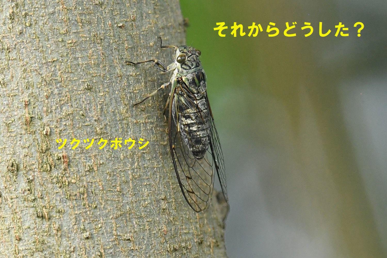 f0133213_17570448.jpg
