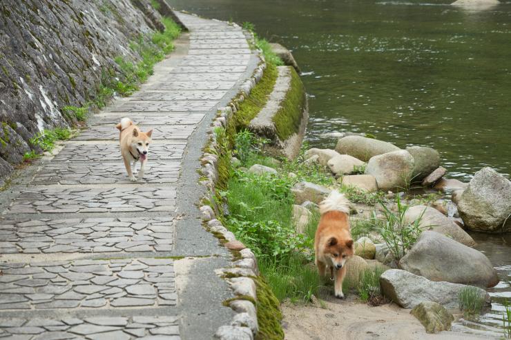 sakura&waku(4cut) 奥津温泉_e0342136_09400366.jpg