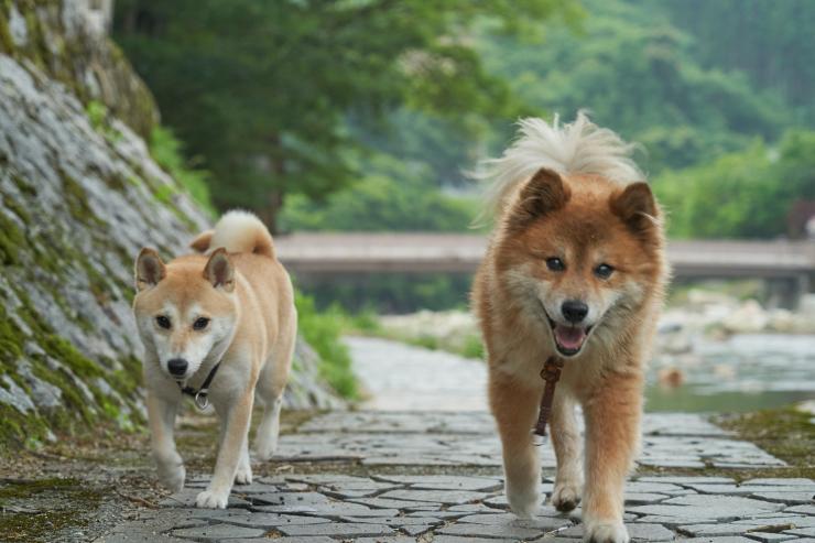 sakura&waku(4cut) 奥津温泉_e0342136_09401862.jpg
