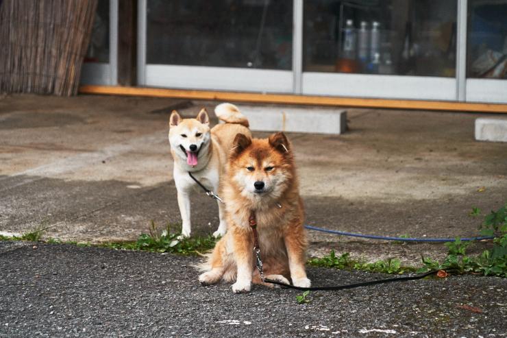 sakura&waku(2cut) 写真はいやだ!_e0342136_10225379.jpg
