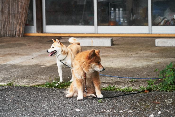 sakura&waku(2cut) 写真はいやだ!_e0342136_10225816.jpg