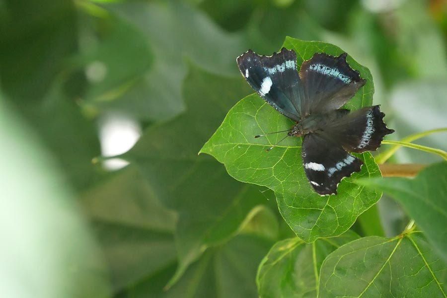 庭のチョウ~初めてのお客さんが来訪_c0043361_22460884.jpg