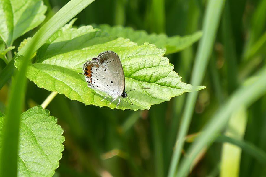 庭のチョウ~初めてのお客さんが来訪_c0043361_22461053.jpg