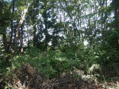 山桜の植樹スペース確保に目途8・17六国見山手入れ_c0014967_21094481.jpg