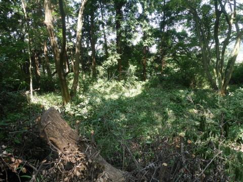 山桜の植樹スペース確保に目途8・17六国見山手入れ_c0014967_21101213.jpg