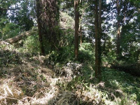 山桜の植樹スペース確保に目途8・17六国見山手入れ_c0014967_21105963.jpg