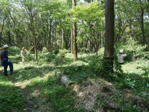 山桜の植樹スペース確保に目途8・17六国見山手入れ_c0014967_21124226.jpg