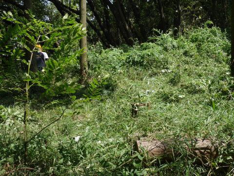 山桜の植樹スペース確保に目途8・17六国見山手入れ_c0014967_21133412.jpg