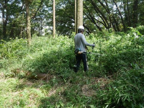 山桜の植樹スペース確保に目途8・17六国見山手入れ_c0014967_21152881.jpg
