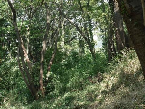山桜の植樹スペース確保に目途8・17六国見山手入れ_c0014967_21171601.jpg