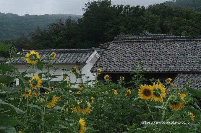 向日葵の咲く_b0324291_18343576.jpg