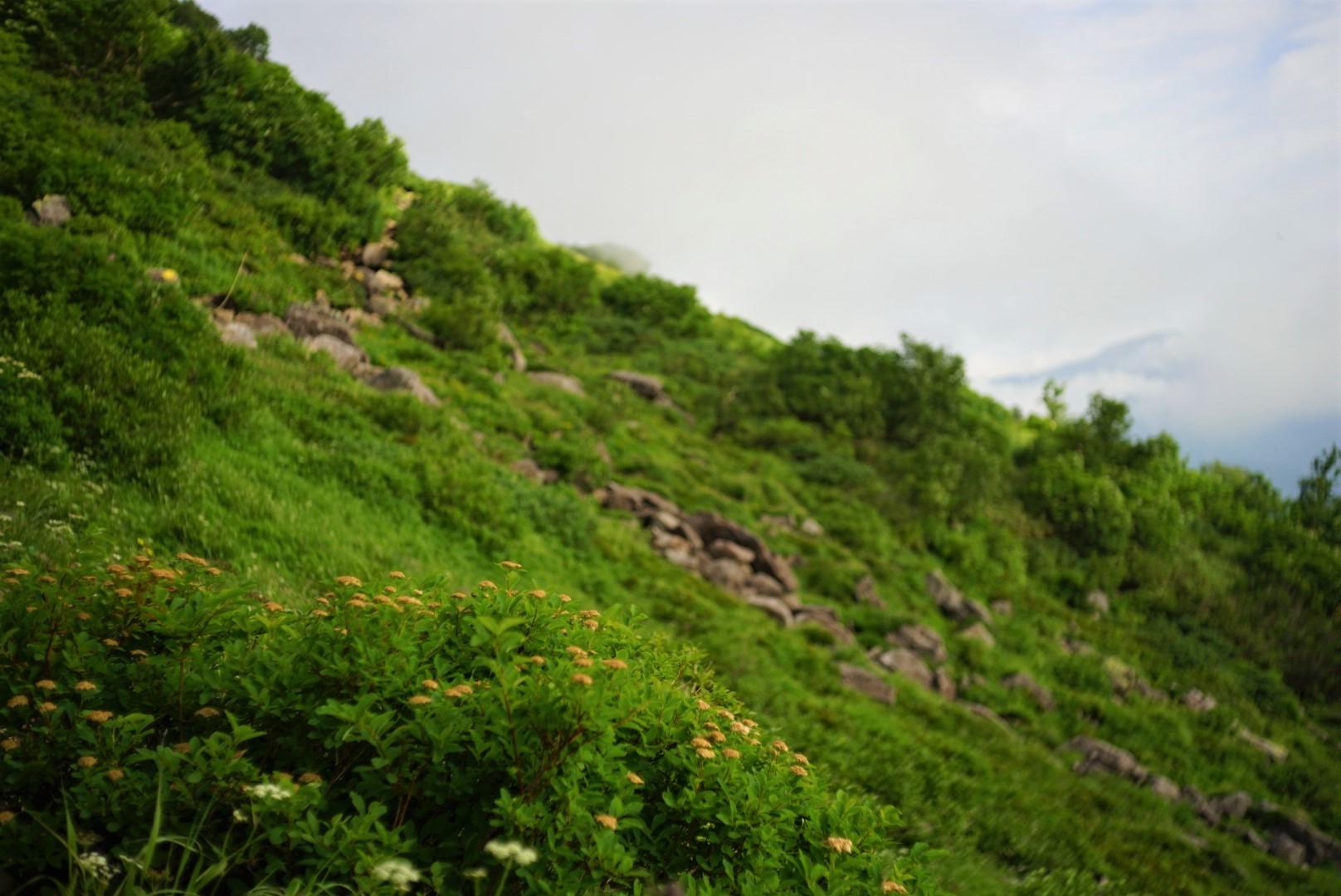 フィールドレポート 銀泉台~層雲峡_d0198793_16192558.jpg